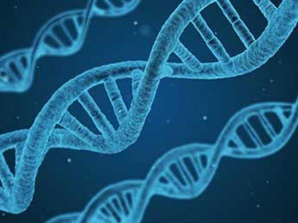 Ученые нашли ген, отвечающий за старение мозга