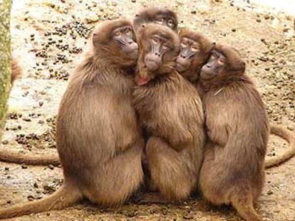 Ученые: именно фрукты превратили обезьяну в человека