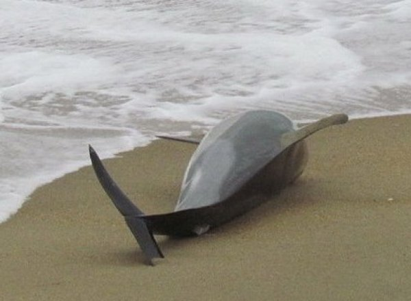 В Одесской области на берег выбросило десятки мертвых дельфинов (ФОТО)