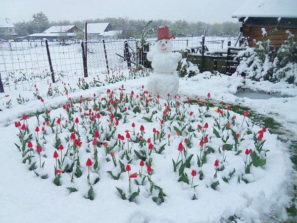 Конспирологи назвали неожиданные причины аномально холодных весны и лета 201