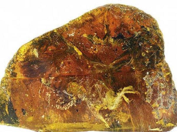 Ученые показали птенца возрастом 99 млн лет в застывшем янтаре (ВИДЕО)