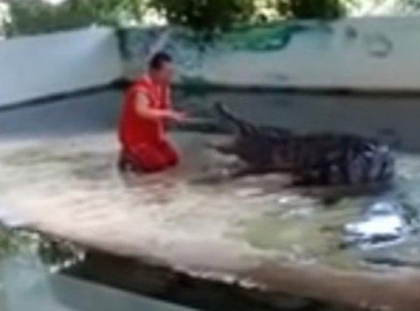 YouTube шокирован ВИДЕО, как в Тайланде крокодил прокусил дрессировщику голову