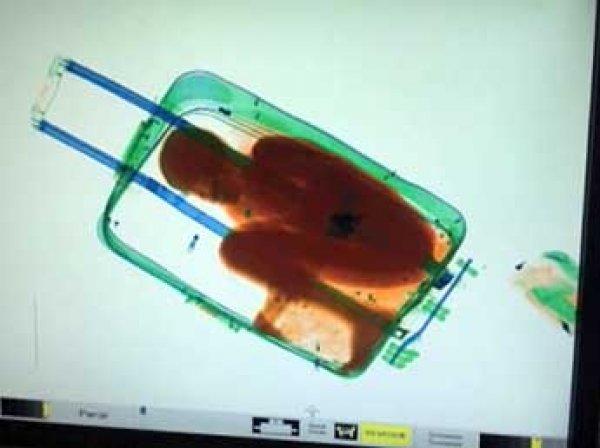После отмены виз в ЕС украинка попыталась ввезти сына в Польшу в чемодане