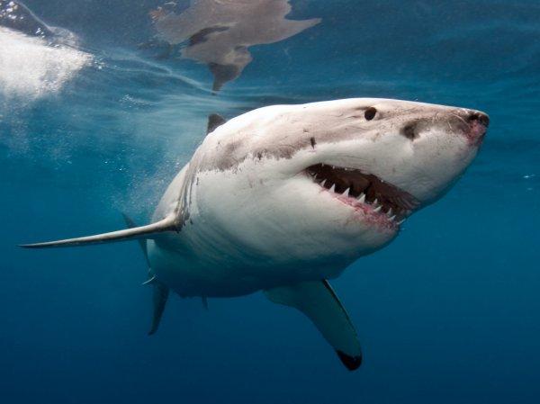 YouTube ВИДЕО: американец снял нападение на него акулы