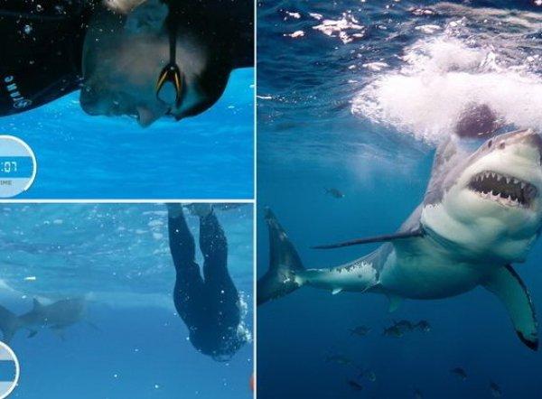 Майкл Фелпс проиграл белой акуле в заплыве на 100 метров