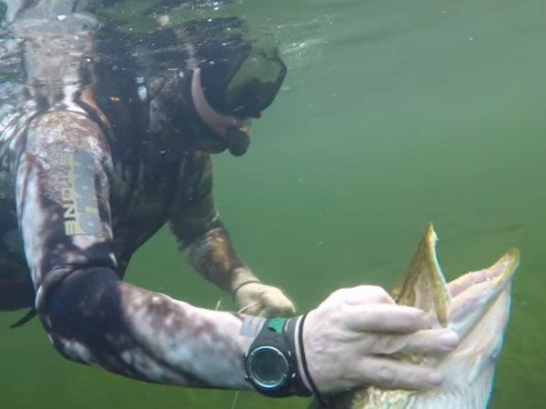 Видео подводной охоты Путина на щуку появилось в Сети