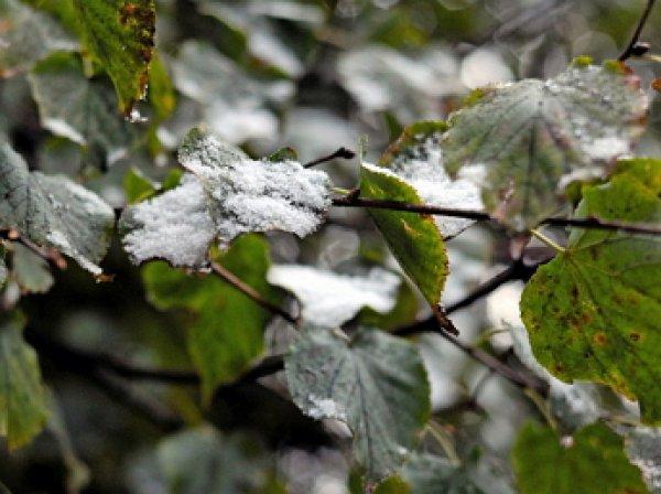 Гидрометцентр предупредил о заморозках в Москве к концу недели