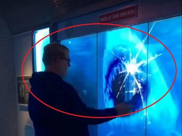 YouTube ВИДЕО: гигантская музейная акула отбросила на пару метров перепуганного посетителя