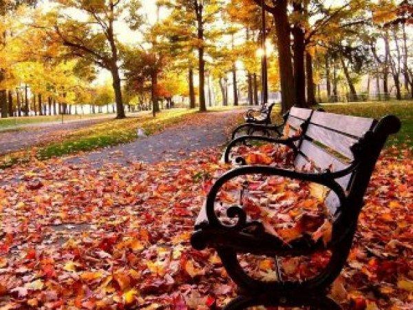 Какой сегодня праздник: 5 октября 2017 отмечается церковный праздник Иона и Фока (Листопадная)