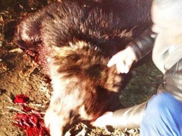 Медведь напал на школьника в центре сибирского города