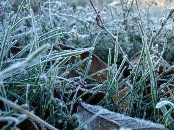 Синоптики рассказали, когда в Москву придут заморозки