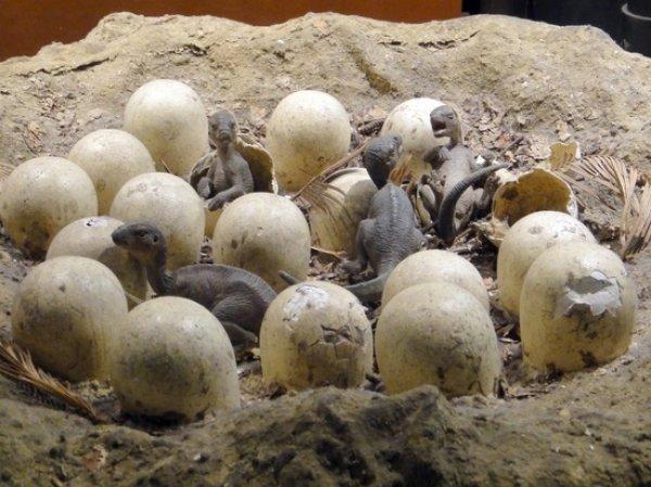 В Сибири впервые в России нашли яйцо динозавра