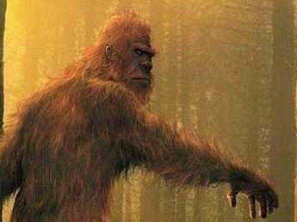 """Американские ученые расшифровали ДНК """"йети"""""""