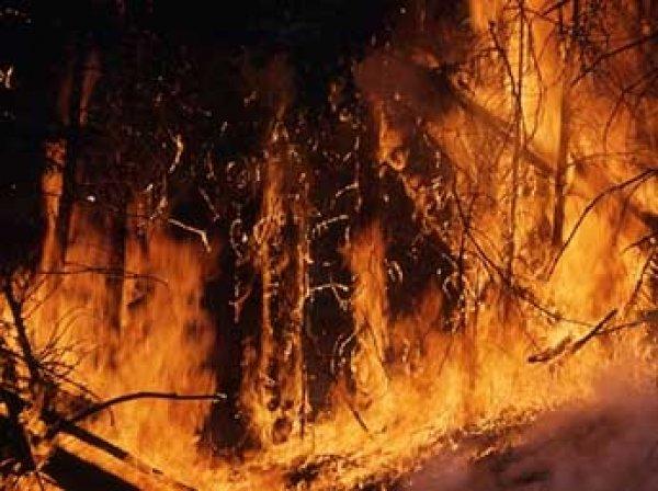 Режим ЧС введен в Калифорнии из-за лесных пожаров: есть жертвы