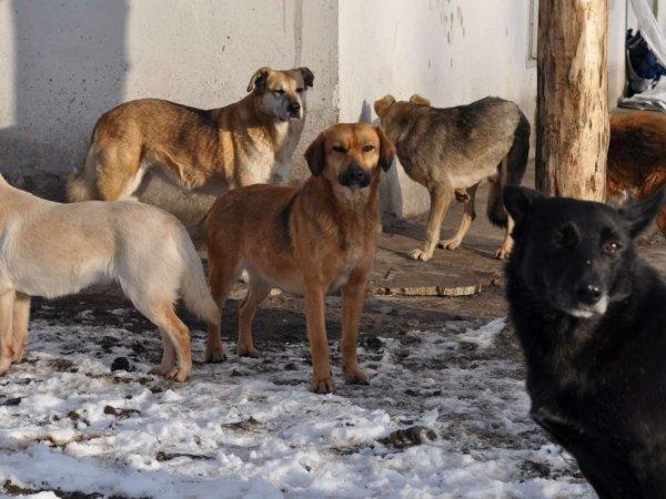 В Брянске мужчина случайно убил двухлетнюю дочь и скормил труп бродячим собакам