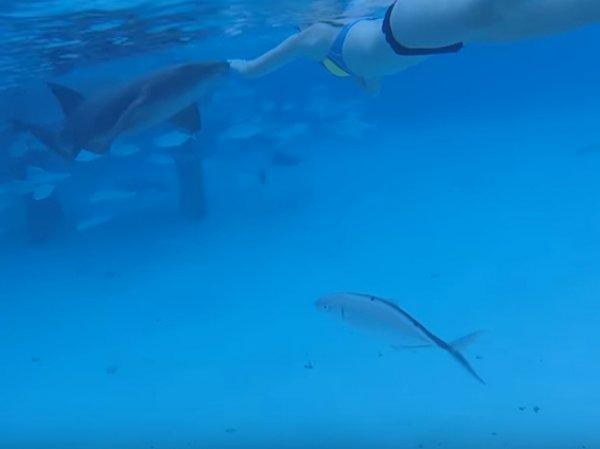 В США мужчина снял на видео нападение акулы на собственную жену