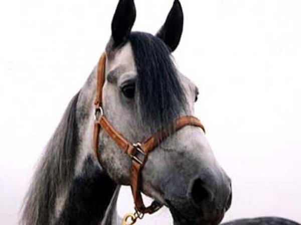 СМИ: полковник Захарченко подарил дочери на Новый год коня Олигарха за 650 тысяч рублей