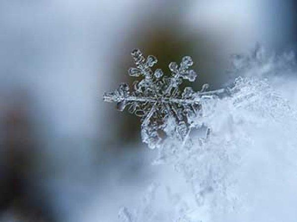 Шведские ученые открыли новый вид снежинки - звезду с хоботком