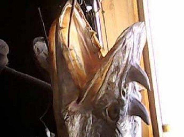 В Омской области рыбак поймал  в реке щук-драконов
