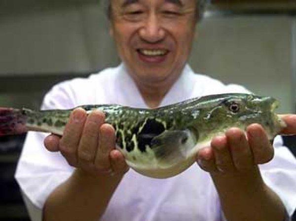 В Японии спецслужбы подняли по тревоге из-за попадания в продажи ядовитой печени рыбы фугу