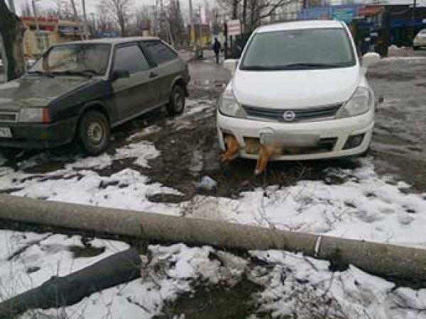 В Таганроге депутат-единорос сбил собаку и несколько дней ездил по городу с застрявшим в бампере животным
