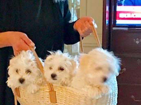Барбара Стрейзанд рассказала, как клонировала свою любимую собаку