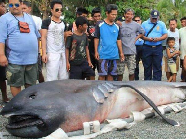 Жителей филиппинской деревни напугало странное морское существо, выброшенное на берег