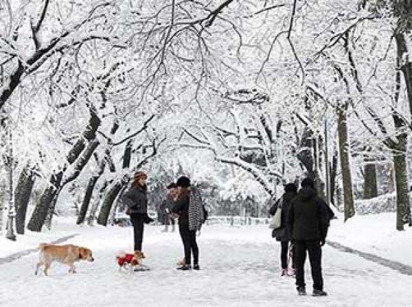 Впервые за полвека Неаполь засыпало снегом