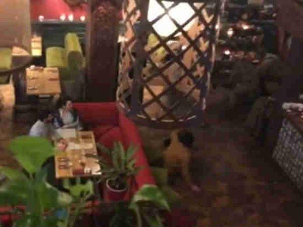 В киевском ресторане задержали Саакашвили, чтобы выдворить из Украины