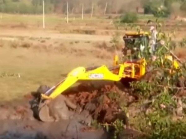 YouTube видео счастливого спасения слоненка с помощью экскаватора появилось в Сети