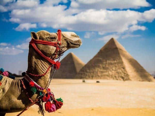 Российские туроператоры продали первые путевки в Египет