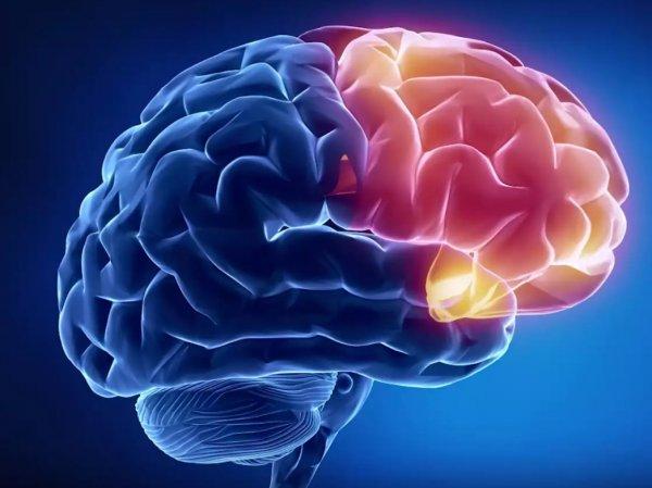 Ученые нашли способ предотвращения смерти мозга