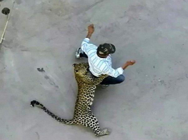 На YouTube попало видео нападения леопарда на мужчину на улице в Индии