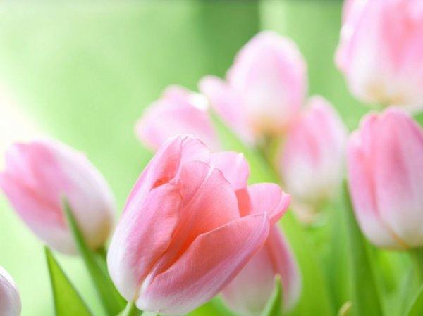 Поздравления с 8 марта короткие в стихах и прозе