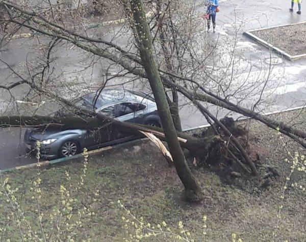 Ураган в Москве 21 апреля 2018 стал причиной гибели ребенка (ФОТО, ВИДЕО)