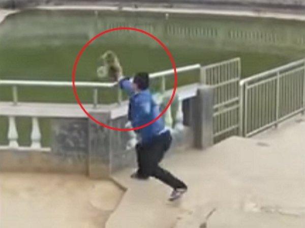 На YouTube появилось видео мести макаки туристу, который столкнул ее в воду