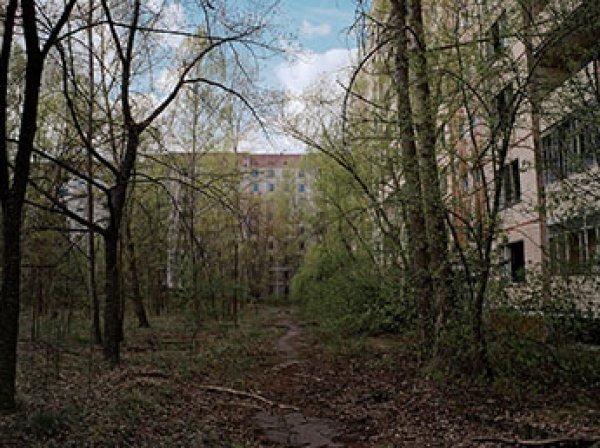"""Эксперт объяснил, почему Чернобыль стал """"раем на Земле"""""""