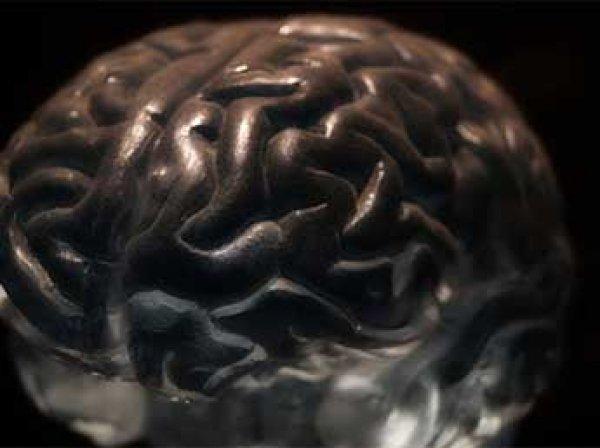 Американские ученые нашли способ сохранять мозг живым 36 часов вне тела