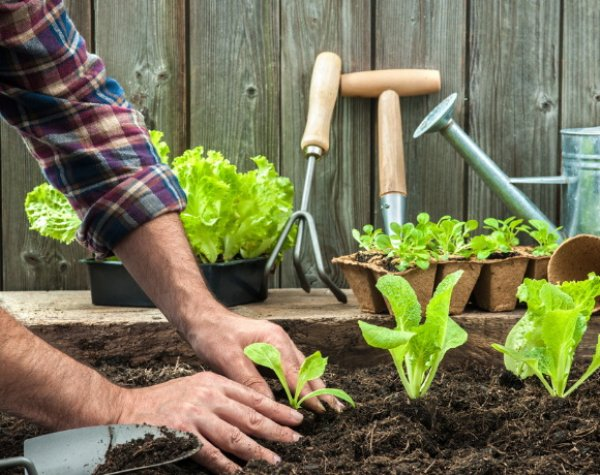 Сезон огородных работ: внимание, травмы!