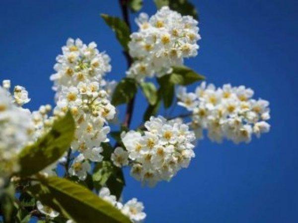Какой сегодня праздник: 4 мая 2018 отмечается церковный праздник Проклов день