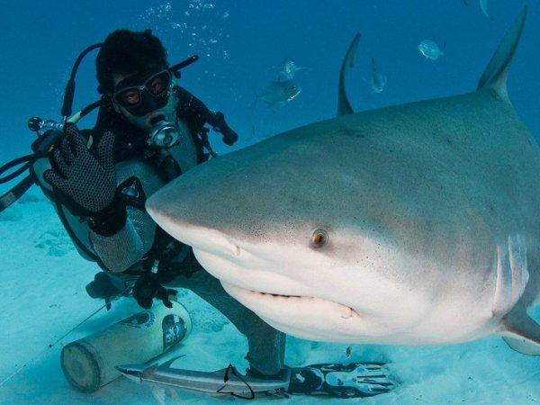 Известный телеведущий избил акулу в присутствии дельфина