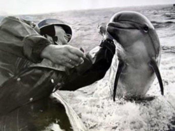 """Постпред Порошенко: украинские боевые дельфины в Крыму """"отказались подчиняться россиянам"""" и погибли"""