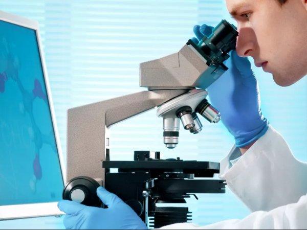 Ученые: неподдающийся лечению грибок может привести к катастрофической эпидемии