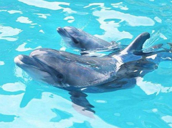 На YouTube появилось видео, как самка дельфина родила прямо во время выступления