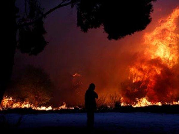 Из-за лесных пожаров в Греции погибли 50 человек