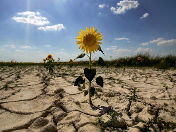 Украина устроила жуткую засуху в Крыму: фото из космоса раскрыли масштаб катастрофы