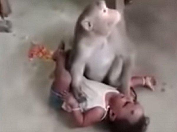 В Индии макака похитила младенца и не хотела отдавать