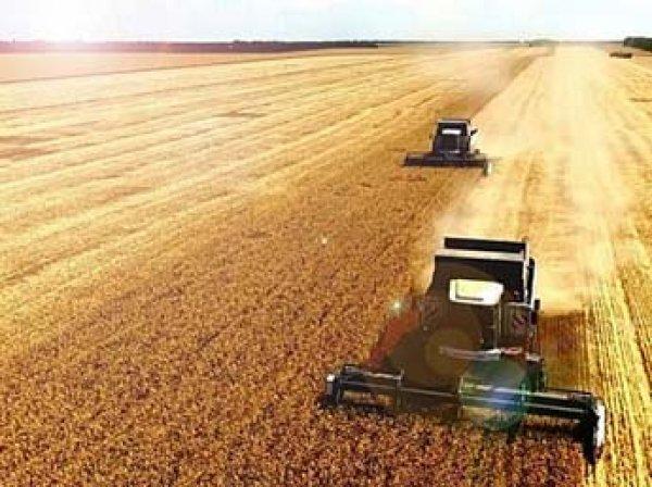 ИноСМИ увидели угрозы фермерам США в рекордном урожае пшеницы в России