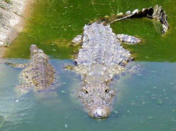 В Уганде женщину с младенцем оставили на съедение крокодилу