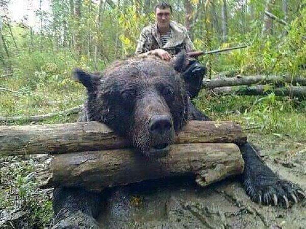 """""""Медвегодзилла"""": фото убитого """"медведя-людоеда"""" весом в тонну шокировало Сеть"""